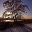Lonely tree in wintertime at sunset — Stock Photo