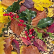 Holly berry with autumn leaves - Stock Photo