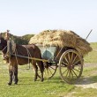 Stock Photo: Donkey pulling ancient handcart full of hay