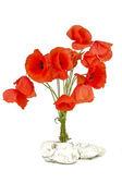 Ramo de flores de amapola silvestres — Foto de Stock
