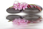 Therapeutic zen, spa stones with flowers isolated — Stock Photo