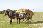 Donkey pulling an ancient handcart full of hay — Stock Photo