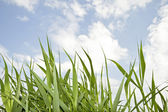 Grass in the fields in springtime — Stock Photo