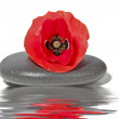 Zen stone with red poppy flower with water — Stock Photo #11500490
