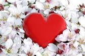 Cuore rosso in un letto di springflowers — Foto Stock