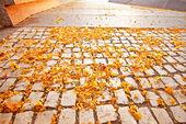Pavimentazione da pietre ciottoli con petali di fiori — Foto Stock