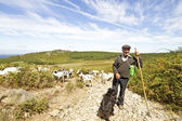 Shepherd with his flock in the countryside from Portugal — Stock Photo
