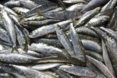 Fresh sardines, can be used as background — Stock Photo