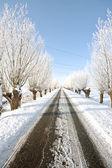 Hollanda kırsal karlı countryroad — Stok fotoğraf