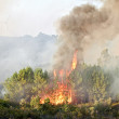 Big forest fire in the countryside from Portugal — Stock Photo