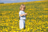 Boy with a dandelion — Stock Photo