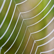 Spiderweb — Stock Photo #11215839