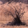 Stock Photo: Bushveld bush