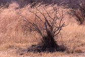 Bushveld bush — Stock Photo