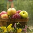 Raining on Basket of Apples — Stock Photo