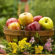 Country Basket of Apples - Stock Photo