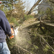 Stock Photo: MCutting Down Tree