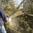 Man Cutting Down Tree — Stock Photo