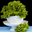 Rich Green Leafy Vegetable — Stock Photo