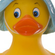 Yellow Duck Portrait — Stockfoto