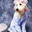 Doggie Taking a Bath - Stock Photo