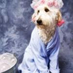 Doggie Taking a Bath — Stock Photo #11271436