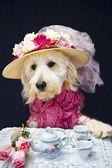 Tè per due cagnolino — Foto Stock