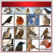 Stock Photo: Set of birds
