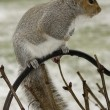 Squirrels and Snow - Stock Photo