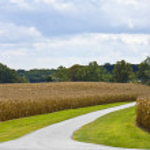 Road Through Cornfields — Stock Photo