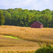 Country View of Farm in Distance — Stock Photo #11488667