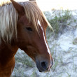 Horse Portrait Closeup - Stock Photo