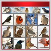 Set of birds — Stock Photo