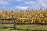 Split-rail Fence & Cornfield — Stock Photo