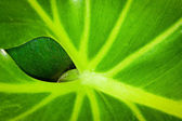A leaf behind a leaf — Stock Photo