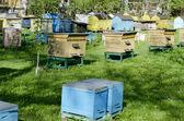 Beehive — Zdjęcie stockowe