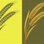 Постер, плакат: Wheat