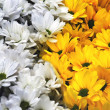 Yellow and white flowers — Stock Photo