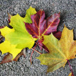 Leaves of the maple — Stock Photo #11877980