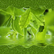 Green leaves in water — Stock Photo #11897849