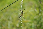 Spider sitting on a web — Stok fotoğraf