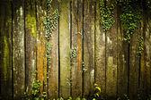 老 grunge 木材纹理与叶子 — 图库照片