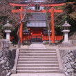 Torii Gate and sakura — Stock Photo