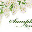 Foto Stock: White flower border card