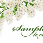 carta di frontiera fiore bianco — Foto Stock