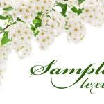 tarjeta de frontera flor blanca — Foto de Stock