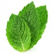 Fresh mint leave — Stock Photo
