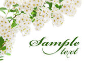 White flower border card — Stock Photo