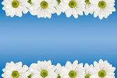 Flowers frame — Stock Photo