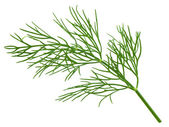 Green dill — Stock fotografie